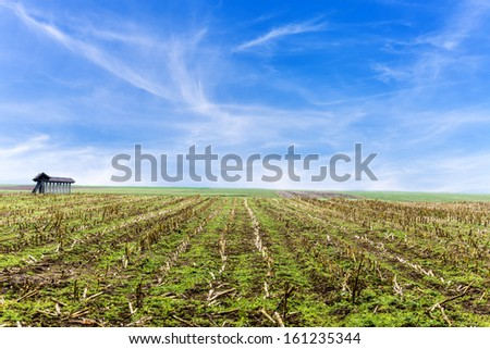Corn field after harvest with beautiful sky.