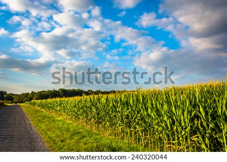 Corn field along a road in rural York County, Pennsylvania.