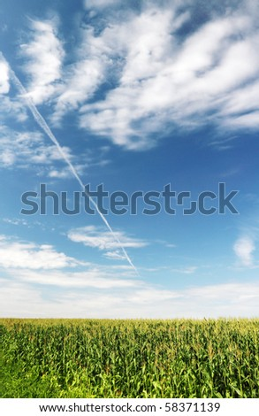 Corn field and clouds.