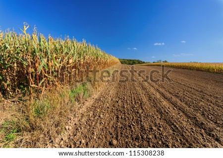 Corn field at autumn season near Krakow, Poland - stock photo