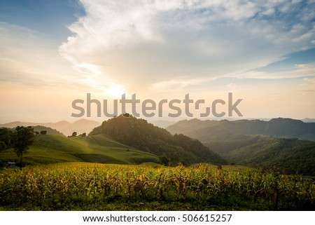 corn field on hill with colorful sky on sunset background