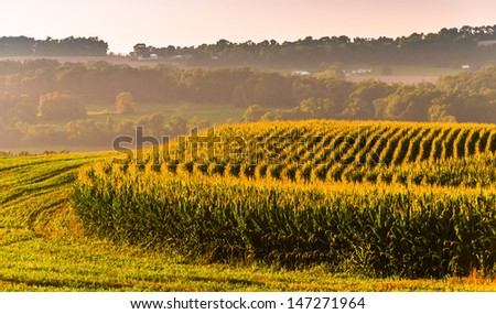 Corn fields and view of distant hills in rural York County, Pennsylvania. - stock photo