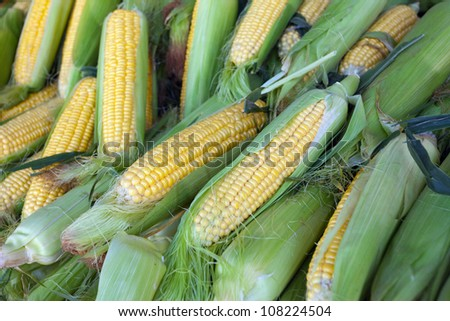 Corn for sale at farmers' market - stock photo