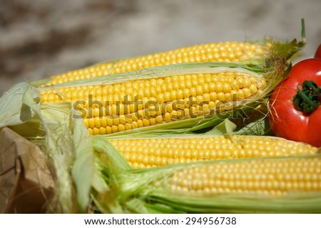 Corn fresh vegetables organic food, Grains of ripe corn summer harvest, corn cob between green leaves, bio corn, healthy eating and diet concept, selective focus, series - stock photo