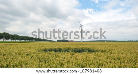 Corn growing on a field in summer - stock photo