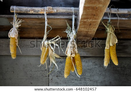 Corn Hanging from the Ceiling of Barn, Old House