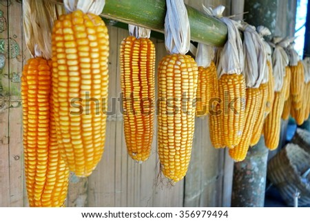 corn hanging out in the sun to dry, selective focus - stock photo