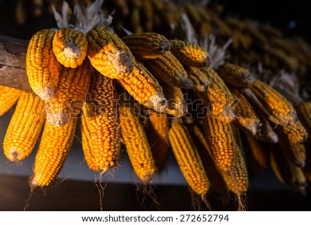 Corn in a cottage - stock photo