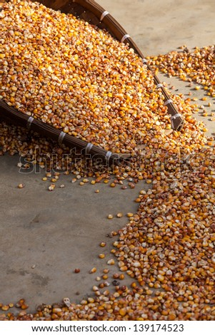 Corn in basket being dried on the ground