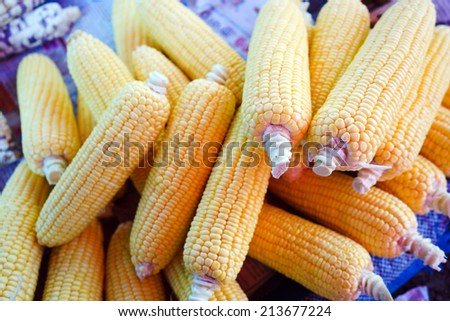 Corn, Indian corn, Maize, Zea mays Linn. - stock photo