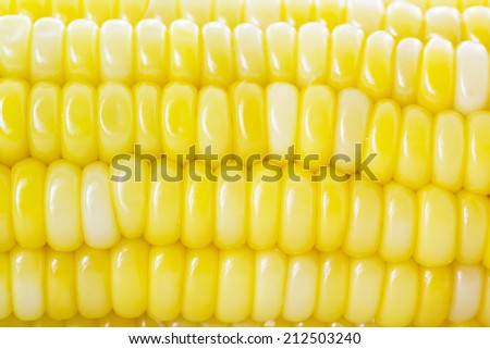 Corn isolated on a white background - stock photo