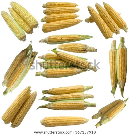 Corn isolated on a white background. - stock photo