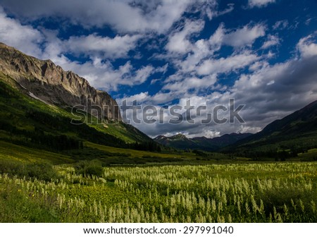 Corn Lily Meadow at Gothic Mountain, Crested Butte, Colorado - stock photo