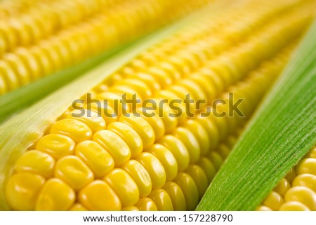 Corn macro - stock photo