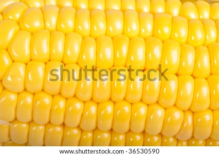 Corn. Macro - stock photo