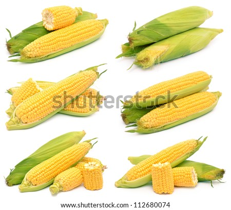 Corn on a white background - stock photo