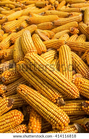 corn on the cob boiled corn corn meal ripe corn juicy corn Photo boiled corn Photo popcorn corn background tasty corn