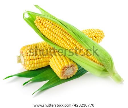 Corn on the cob kernels close up shot - stock photo