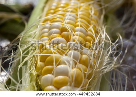 Corn on the cob up close macro photography photo cooked background backdrop yellow white kernels ears still in the husk starting to peel  - stock photo