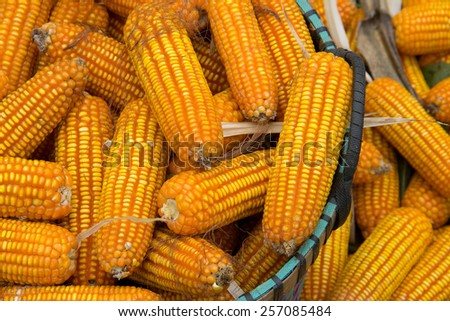 Corn on the stalk in basket - stock photo