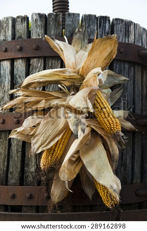 corn ornament - stock photo