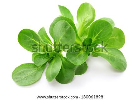 corn salad isolated on white background - stock photo