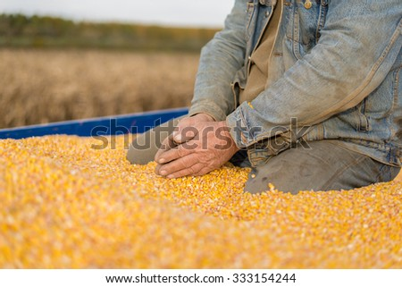 Corn seed in hand of farmer.