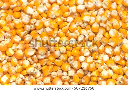 Corn seeds background.