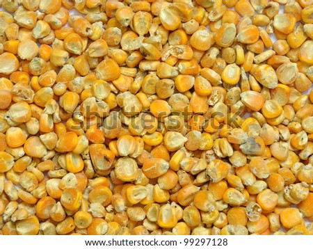 Corn seeds for animal feed background - stock photo