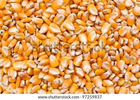 Corn seeds texture - stock photo