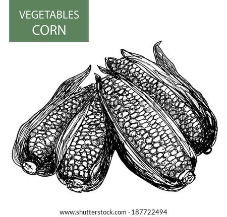 Corn-set illustration - stock photo