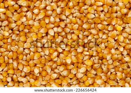 Corn Surface Texture Top View Close up. Pattern Background - stock photo