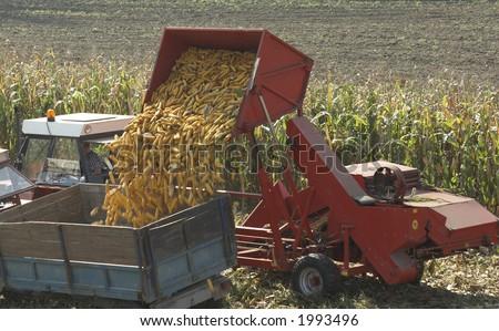 Corn transport - stock photo
