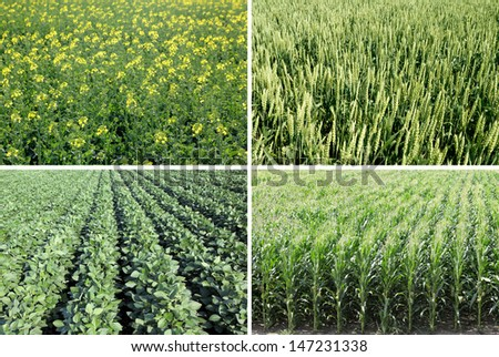 Corn, wheat, rapeseed and soy field in spring - stock photo