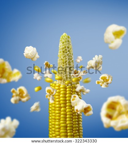 corncob explodes and produces popcorn healthy vegetarian food - stock photo