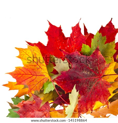 Corner Border of colored falling leafs on white background - stock photo