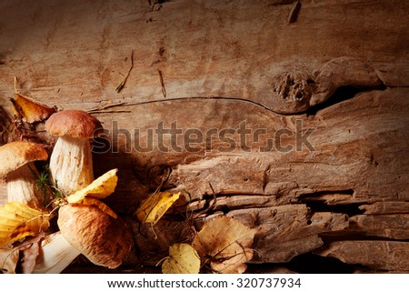 Corner border of fresh autumn mushrooms collected in the forest for use in seasonal fall cuisine displayed on a rustic wooden board with copyspace, overhead view - stock photo