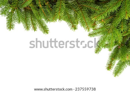 corner made of green spruce branches - stock photo