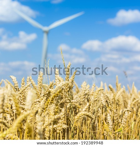 Cornfield agriculture landscape with blue sky and a Wind turbine in the background - stock photo
