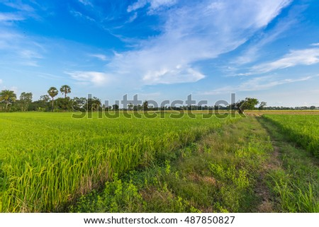cornfield and evening background in Thailand.