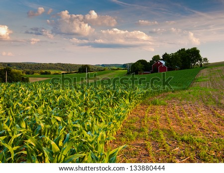 Cornfield and farm in Southern York County, Pennsylvania - stock photo