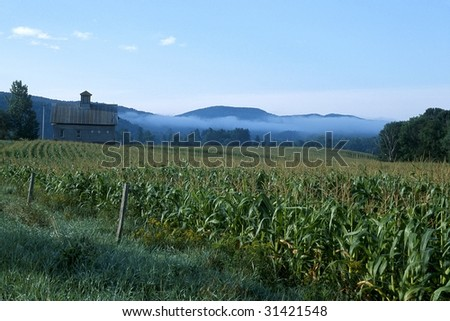 cornfield fog - stock photo