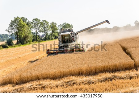 cornfield with wheat at harvest - stock photo