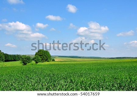 Cornfields in spring time with blue sky and clouds - stock photo