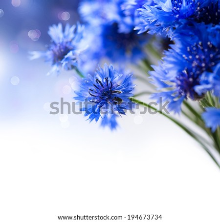 Cornflowers. Wild Blue Flowers Blooming. Border Art Design. White background. Closeup Image. Soft Focus - stock photo