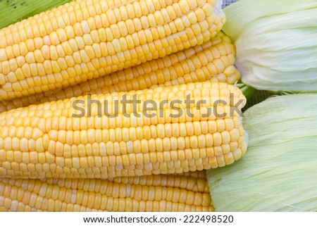 corns backgrounds - stock photo