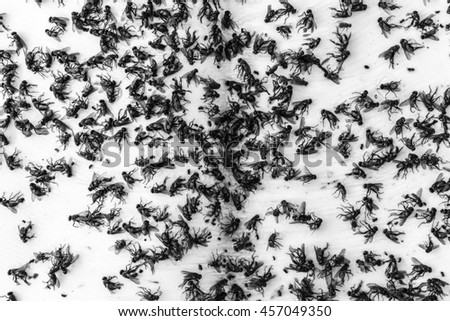 corpse fly on black and white background