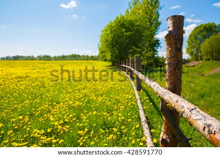 Corral for farm. Rural view flower meadow and fenced place for walking cows. Pastoral panorama on a paddock. Beautiful landscape of a Sunny day. Field yellow dandelions to ruminant cattle livestock. - stock photo