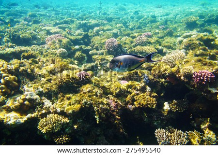 Corrals in deep of the sea - stock photo
