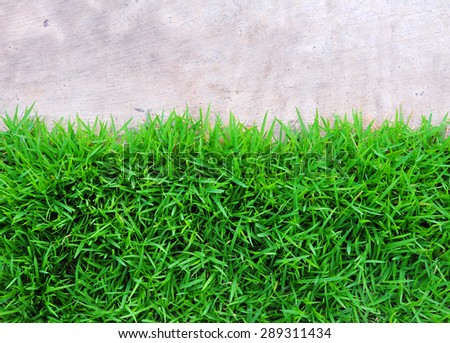 Corridor with natural green grass - stock photo